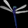הרחקת יתושים