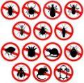 שיטות הדברת חרקים בבית או בגינה