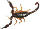 הדברת עקרבים בבית או בגינה