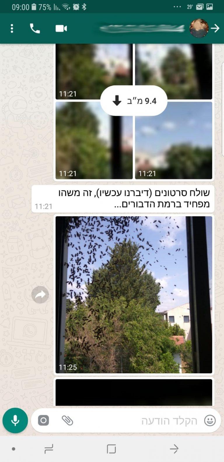 זיהוי דבורת הדבש על חלון בדירה